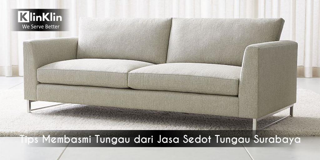 Tips Membasmi Tungau dari Jasa Sedot Tungau Surabaya